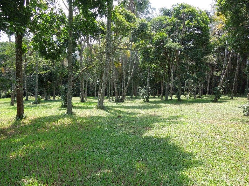 Área do bosque de 10.000 m2 que tambem serve como estacionamento.